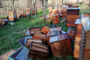Satni okviri sami od sebe iskakali uslijed potresa - pčele Vucićevih pod stalnim su stresom