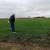 Pšenica u Vojvodini u dobrom stanju - uočljiv potencijal za dobar prinos
