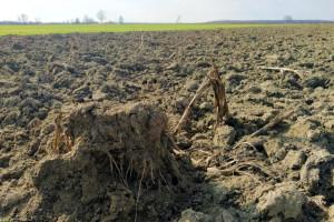 Kako bi došli do zemlje, mladi poljoprivrednici krče zapuštene parcele