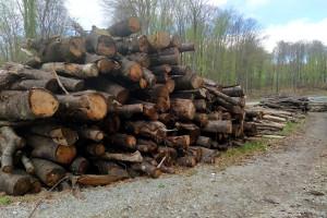 Stanje svetskih šuma sve lošije: COVID-19 će pogoršati situaciju?