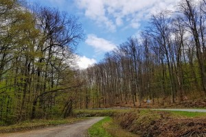 Potrebno je bolje mapiranje i stroga zaštita primarnih i starih šuma