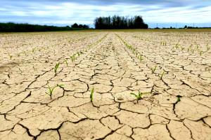 Dugoročna prognoza: Koje delove Evrope će zahvatiti suša?