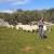 Zoran Mrakovčić: Bez hitne intervencije, ovčarstvo će na Krku zamrijeti zbog čagljeva