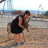 Prve primorsko-dinarske magarce nabavili radi djece, a sada razvijaju pravi mali biznis