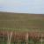 Rezidba vinove loze