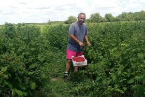 Muke poljoprivrednika u Bačkoj Palanci: Posla ima, ali radnika nema