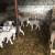 Nemanja Marjanović: Ovčarstvo je moja budućnost