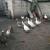 Zoran Sirovina: Seosko dvorište je moja oaza mira