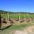 Anton Katunar: Vraćamo se starom tipu vina, sadimo na škrtoj zemlji za bolju sirovinu