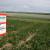 RWA predstavio rezultate robusne sorte RGT SINFONIA, prinosi soje do 4,8 t/ha