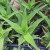 Lekovite biljke koje možete da uzgajate u svojoj bašti