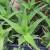 Ljekovite biljke koje možete da uzgajate u svojoj bašti