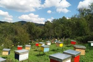 Profesor biologije napustio prosvetu i posvetio se pčelarstvu