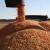 Kukuruz INCLUSIV dao prosječno 13 t/ha, a u Međimurju preko 16 t/ha suhog zrna