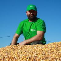 PERSIC je novi RWA dragulj među hibridima kukuruza s prinosom preko 14 t/ha