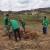 Drijen: Perspektivna vrsta za intenzivni voćarski uzgoj