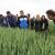 Žetva pšenice će kasniti, ali prinosi će se kretati i do osam tona po hektaru