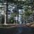 Šumske sadnice: O upotrebi drveća razmišljajte pre sadnje