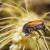 Povećanje temperature: Insekti će jesti više žitarica i biti otporniji na pesticide?