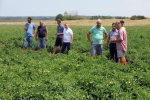 U Umagu će se ove godine preraditi više od 12 tisuća tona rajčice