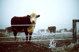 Šta nam donosi jesen - u jugoistočnoj Evropi gotovo zimsko vrijeme
