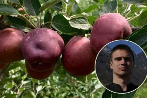 Napustio novinarstvo da bi zasadio jabuke na Fruškoj gori