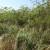Čak 70% travnjaka u Lonjskom polju napala invazivna čivitnjača