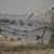 Znatan pad proizvodnje slatkovodne ribe, dominira šaran - nedostaje smuđa i soma