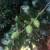 Južno voće ne gajiti na većim površinama, jer se ne isplati?