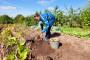 BiH odobren izvoz krompira u EU