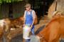 Trend opadanja izvoza mlijeka iz BiH se nastavlja