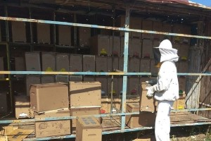 Krste Bukvić s partnerima i u jeku pandemije izvozio pčelinje zajednice u Francusku