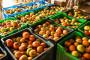Najviše povrća izvozi se u Hrvatsku