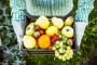 Izvezli smo voća i povrća za 45 miliona eura