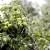 Voće se može uzgajati i na vlažnom zemljištu, pažljivim izborom sorte