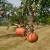 Zaštitite voće od truleži pravovremenim delovanjem