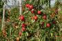 17 stvari koje morate znati pre podizanja voćnjaka