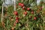 17 stvari za znati prije podizanja voćnjaka