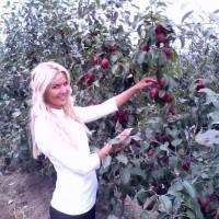 Sorta jabuke pink lady ilegalno se proizvodi u Hrvatskoj?