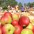Da li ste znali da se 2/3 plantaža voća u EU nalaze u tri države?