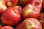 Štete na voću dosegnut će do 900 milijuna kuna