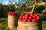 Antistresna mikrobiološka i organska gnojiva u voćarskoj proizvodnji