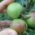 Jabukin, breskvin, šljivin smotavac i kako ih suzbiti