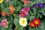 Proljetni vrtić od jaglaca, paprati, zumbula