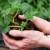 Proljetni uzgoj jagoda: Rane sorte vole južnije položaje