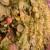 Model primenjiv svuda u svetu: Uzgoj jagoda u kontejnerima
