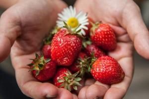 """Ekološko ili """"ekološko"""" - proizvodi sa 220 farme pali na kontroli"""