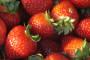 Jesenska sadnja jagoda