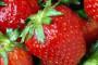 Svježe domaće jagode u suvremenim plastenicima