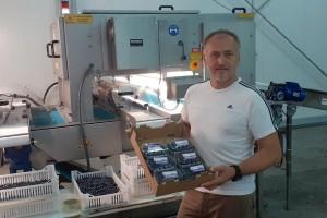 Stroj za sortiranje bobičastog voća rješava potrebe hrvatske proizvodnje